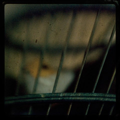 This bird will never fly (2 of 3) (Nico Brons) Tags: blur color bird eye texture birdcage yellow lensbaby freedom nikon grain captured cage sharp canary jackalope unsharp lensbabie bluster
