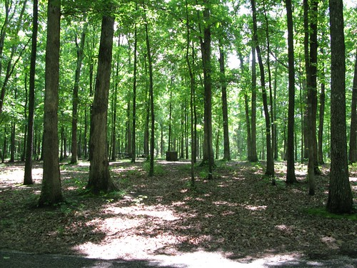 Campground Review Meriwether Lewis Park Near Hohenwald