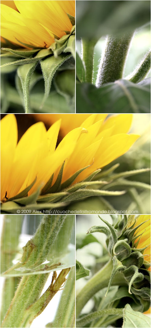 Girasoli collage 2