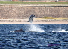 so thats how were playing it then (CAZ MO) Tags: lighthouse landscape boats seal dolphins inverness blackisle morayfirth fortrose bottlenosedolphins channorypoint