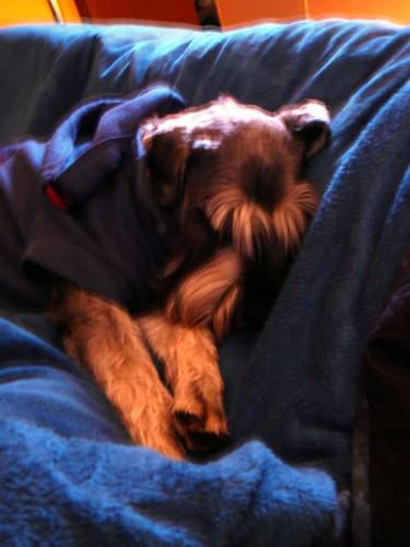 12 fo 12: Snuggle Pup