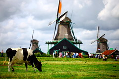 Cant get more Dutch then this, Zaanse schans - The Netherlands (kees straver (will be back online soon friends)) Tags: holland reflection mill water netherlands windmill dutch amsterdam clouds canon river landscape cow canal wind nederland thenetherlands windmills molino netherland holanda molen zaanseschans zaanse schans noordholland zaandam coweatinggrass keesstraver markii5d