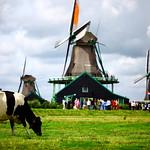 Can't get more Dutch then this, Zaanse schans - The Netherlands