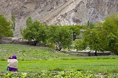 No rush! (bag_lady) Tags: trees pakistan people woman landscape view meadow scene valley fields nala northernareas 5photosaday concordians earthasia worldtrekker chaprotvalley