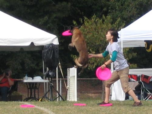 Frisbee Dogs - 5
