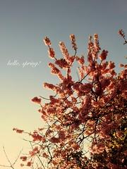 hello, spring! (aris-ressy) Tags: spring australia leura bluemountain arisressy