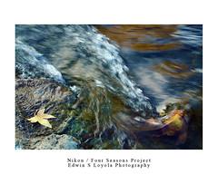 NIKON : THE FOUR SEASONS PROJECT (Edwin Loyola) Tags: winter summer fall spring nikon seasons 4seasons edwinloyola eslphotography