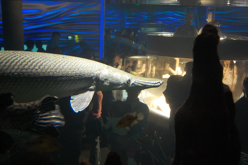 alligator fish,beast fish,ugly fish,biggest fish,