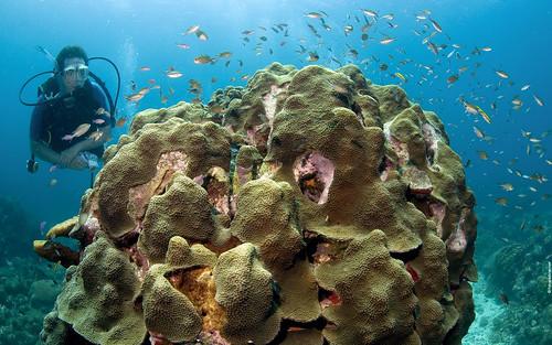 scuba diving wallpaper. scuba-diving wallpapers