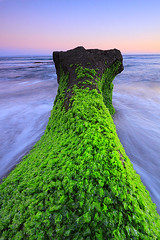 green rock (tropicaLiving - Jessy Eykendorp) Tags: light sunset sea sky bali seascape motion west green beach nature water clouds canon indonesia eos coast rocks action stones shoreline efs 1022mm tanahlot canggu greenrock 50d outdoorphotography canoneos50d bwcpl pantaiseseh tropicaliving hitechfilters sesehbeach rawproccessedwithdigitalphotopro tiffproccessedwithadobephotoshopcs3 hitechfilterndgrad