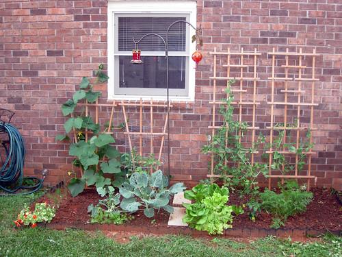 Garden - June