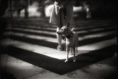 À la verticale de l'été :IV (TommyOshima) Tags: leica blackandwhite film monochrome ir 50mm f10 infrared noctilux rodinal 125 m7 efke ir820 àlaverticaledelété thelittledoglaughednoiretblancet