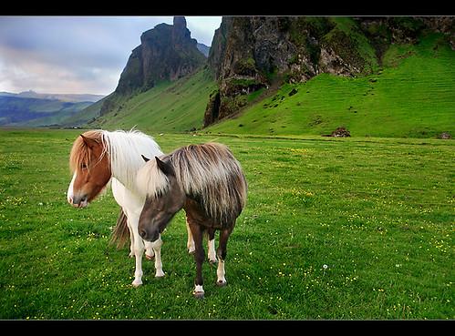 Islandais - Page 2 3821979184_86a684a0d6