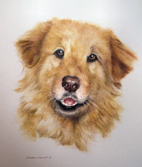 Kayla (gossamerpromise) Tags: portrait dog pet art animal drawing prismacolor coloredpencil