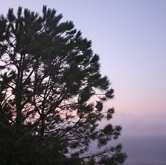 a pieni polmoni ... (Beppe Modica) Tags: sky italy nature italia mare cielo sicily albero colori luce sicilia pantelleria sizilien sicilie lifetravel canoneos450ditalia