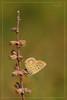 """LA SCALA (Siprico - Silvano) Tags: canon butterfly natura macros farfalla coredo macrofotografia fotografia"""" macrofografia """"macro buzznbugz siprico fotografianaturalistica soloreflex 100commentgroup """"potofgold"""" pricoco wwwsipricoit httpwwwsipricoit silvanopricoco wwwpricocoorg"""