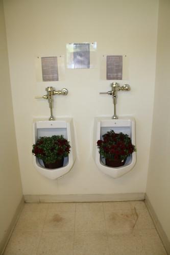 Urinals as Planters