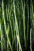 (Miss Plum) Tags: park nyc trestle green grass highline telescopic segmented