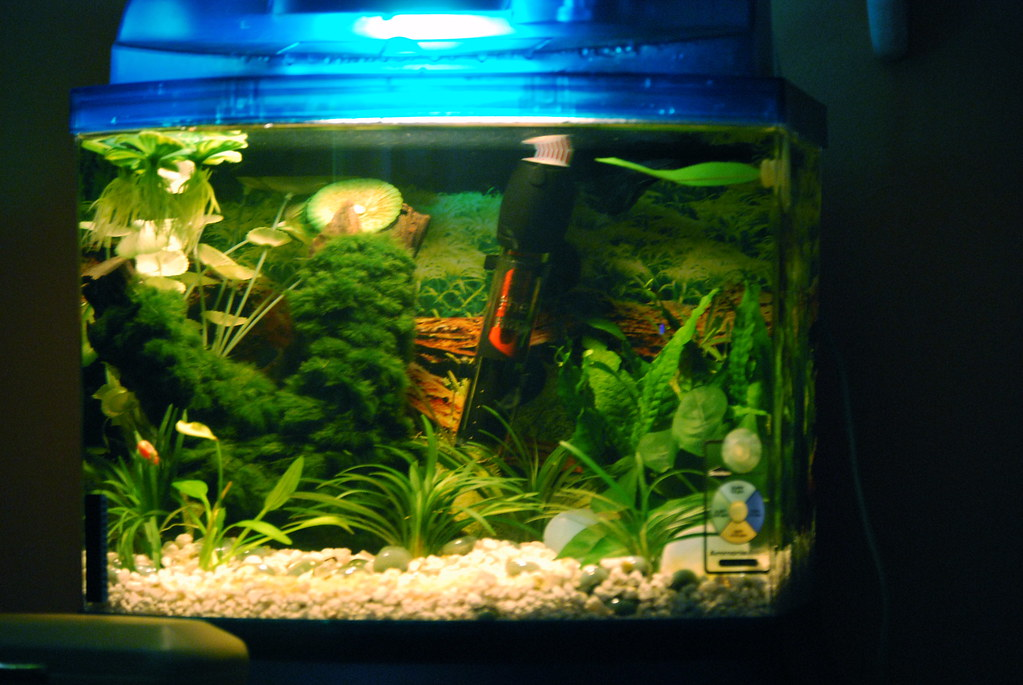 DIY Betta Fish Tank Decorations (10 Gallon ... 10 Gallon Fish Tank Ideas