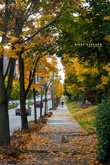 Fall Is Here! (djniks) Tags: road seattle autumn trees green fall leaves weather yellow season walking leaf pavement canon50mmf18 bellevue ih canon40d