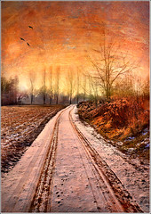 One way (Jean-Michel Priaux) Tags: winter orange snow france cold tree art texture ice nature field illustration photoshop painting way nikon track hiver perspective dream tracks trace poetic dreaming alsace marais hdr chemin anotherworld mattepainting ried d90 priaux superaplus aplusphoto flickrdiamond theunforgettablepictures vanagram vosplusbellesphotos saariysqualitypictures