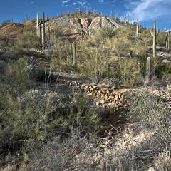 Mine with Polluted Drainage (ken mccown) Tags: arizona cactus tucson saguaro saguaronationalpark sonorandesert