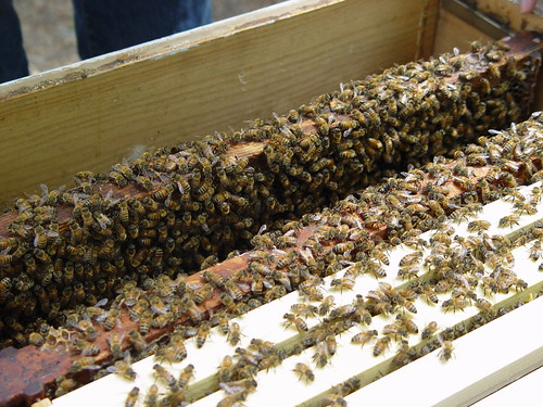 So many bees!