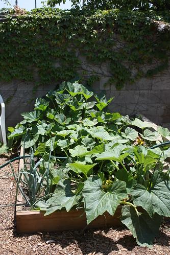 Garden progress May 004.JPG