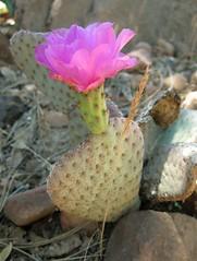 2009/365/153 Heart Flower