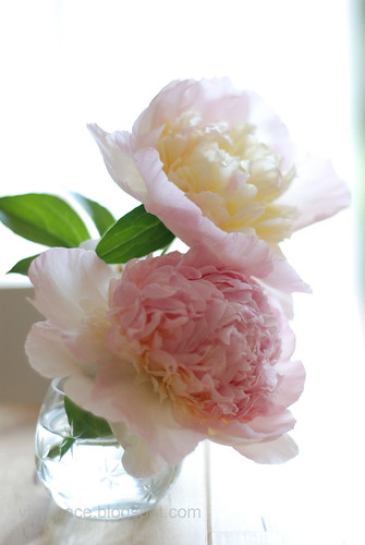 Peonies from the garden 2