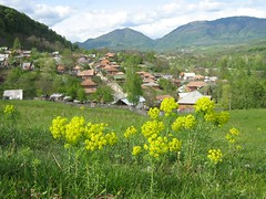 Arges, Romania (seorial2) Tags: flowers foothills inspiration mountains love beauty trut