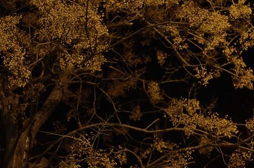 noche 02