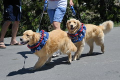 Calla LC Maggie marching in parade on 4th of July at Serene Lakes-08 7-4-09_resize (lamsongf) Tags: california dog goldenretriever calla maggie area summit lc donner goldenretiever serenelakes donnersummit