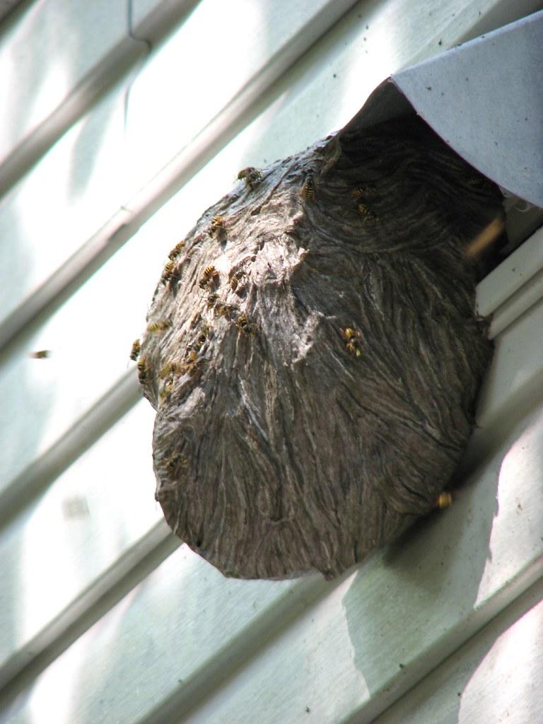 a literal hornets nest