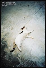 [LC-A] Stray Cats (Kit Tsui) Tags: cat lomo lca kodak hong kong wan  chai  zenith e2c etoc  eb3 ec