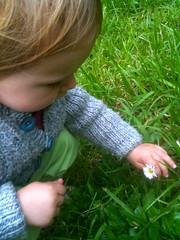 A tiny daisy