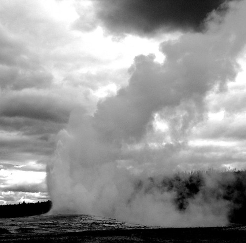 The Yellowstone Experience