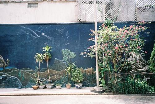 oasis wall