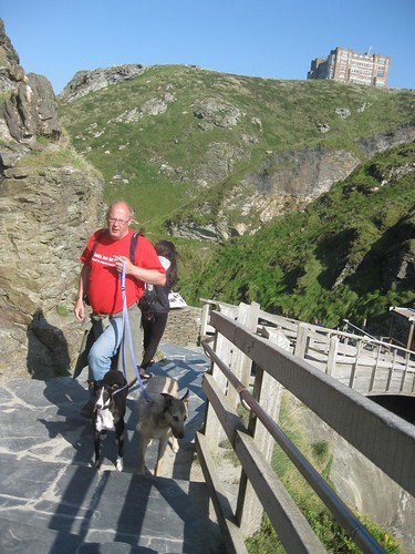Lurchers do Tintagel Castle