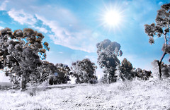 (Mouin.M) Tags: blue trees sky sun sunlight white snow hot cold nature clouds photoshop work ir fun lights google sand exposure flickr mood view picture clarity calm help burn heat infrared rays lands sunrays stillness calmness branchs