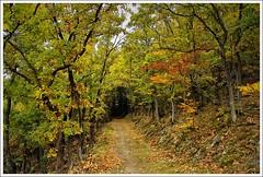 Eichenwald (Regina_Hoer) Tags: autumn herbst sigma oakwood oaks sd10 eichen eichenwald reginahoer