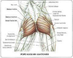 popo resimleri kaslı vücutlar seksi bacak Kaslı kadın vücudu baldır bacak Basen eritme hareketleri Kalça eritme hareketleri