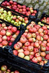 Apples (Lenny&Meriel) Tags: friends cider 2009 foley