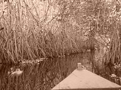Leaving the mangroves.
