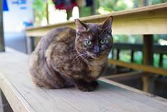 091207 天園休憩所の猫02