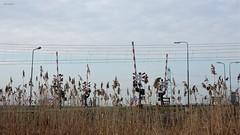 Overweg bij Gieltjesdorp (bcbvisser13) Tags: spoorwegovergang railwaycrossing riet spoorbomen overweg bovenleidin hoogspanningsmast gieltjesdorp provutrecht nederland eu