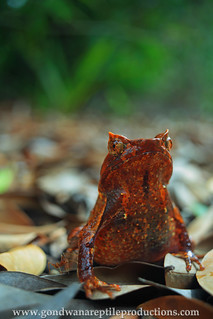 the tale of the angry ant and the horned toad..