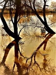 High River, Sacramento (moonjazz) Tags: river sacramento sepia photo trees high nature california flood artistic winter flow