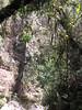 Entering a more jungle-like enviro…