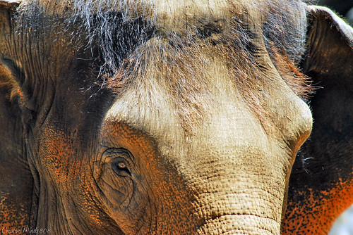 Elephant at the Waikiki Zoo